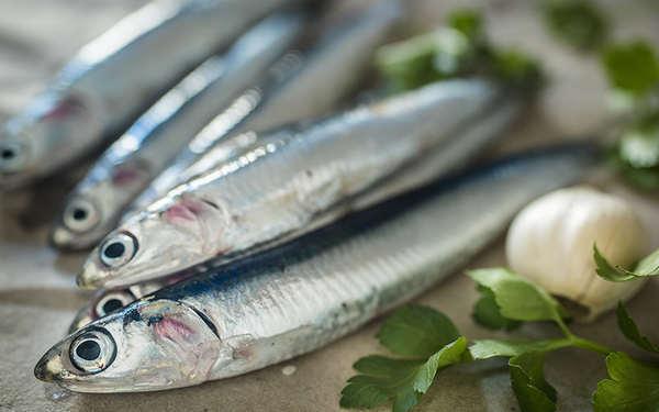 anchoa valor nutricional