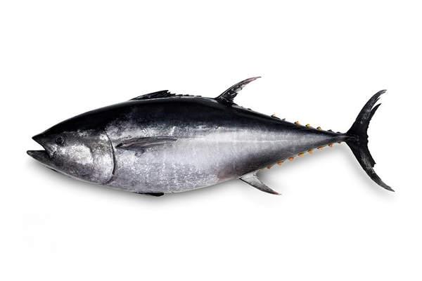 descrizione del tonno