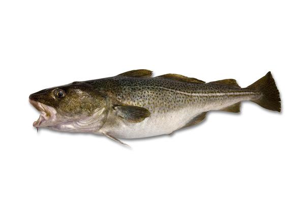 descrizione del merluzzo