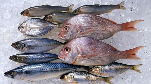 diferencia entre pescado azul y blanco