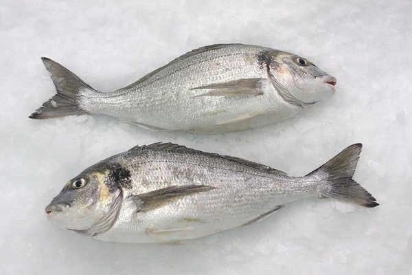 elenco di pesce bianco