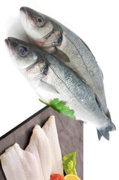 listado de pescados blancos
