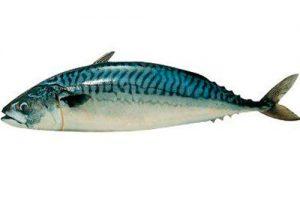 pescado caballa
