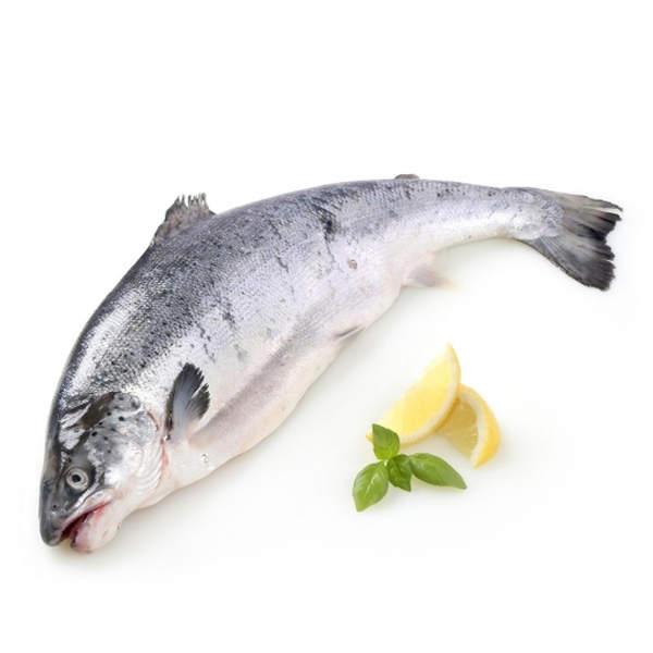 salmon valor nutricional