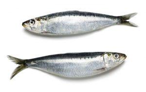 sardina pescado azul